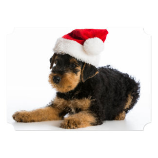 Airedale Terrier Puppy Wearing Santa Hat Card