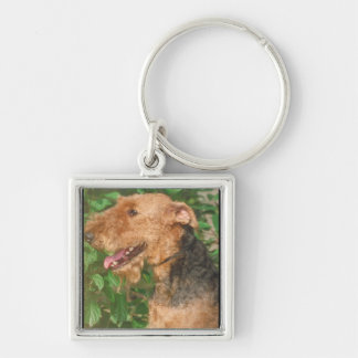 Airedale Terrier Silver-Colored Square Keychain