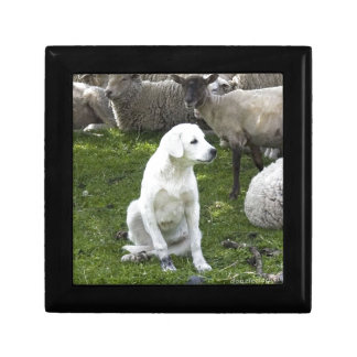Akbash Dog and Sheep Herd Jewelry Box