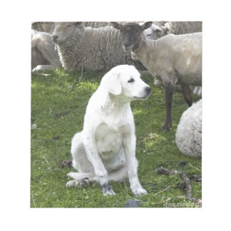 Akbash Dog and Sheep Herd Notepad