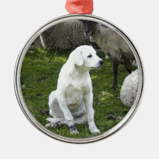 Akbash Dog and Sheep Herd Silver-Colored Round Ornament