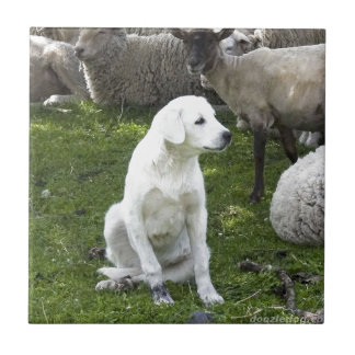 Akbash Dog and Sheep Herd Tile