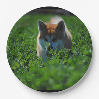 akita-in field paper plate