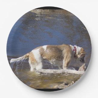 akita in water paper plate