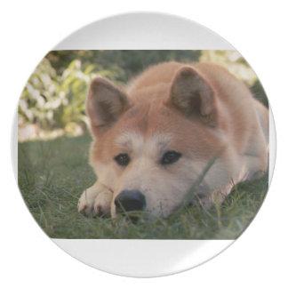 Akita Inu Dog Deep Thoughts Plate