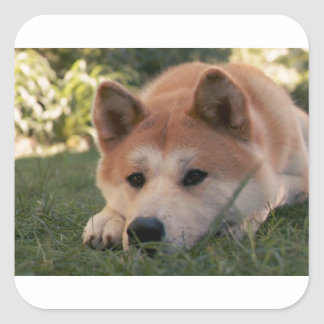 Akita Inu Dog Deep Thoughts Square Sticker