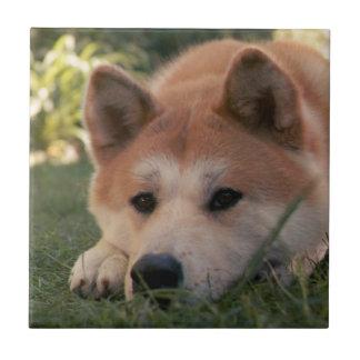 Akita Inu Dog Deep Thoughts Tile