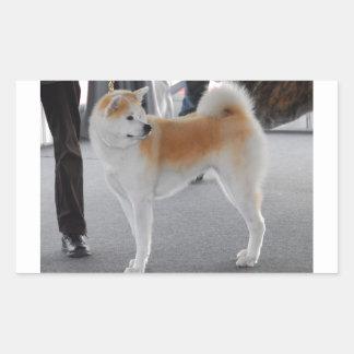 Akita Inu Dog In A Dog Show