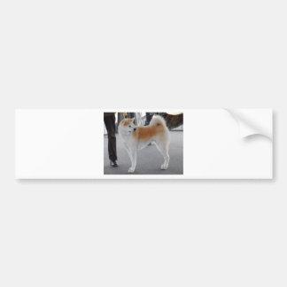 Akita Inu Dog In A Dog Show Bumper Sticker