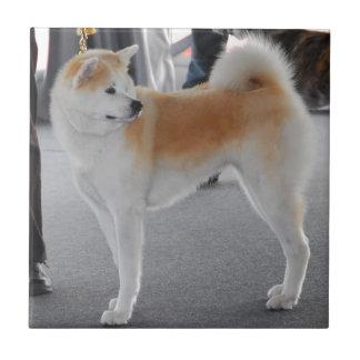 Akita Inu Dog In A Dog Show Ceramic Tile