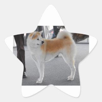 Akita Inu Dog In A Dog Show Star Sticker