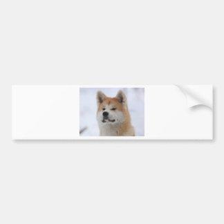 Akita Inu Dog Looking Serious Bumper Sticker