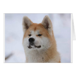 Akita Inu Dog Looking Serious Card