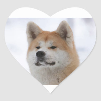 Akita Inu Dog Looking Serious Heart Sticker
