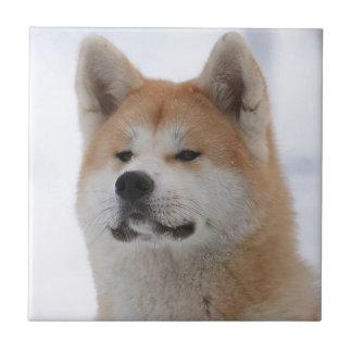 Akita Inu Dog Looking Serious Tiles