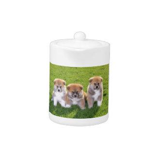 Akita Inu Dog Puppies