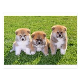 Akita Inu Dog Puppies Postcard