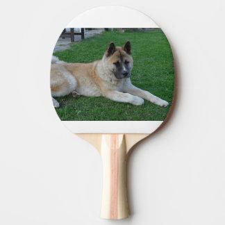 akita laying ping pong paddle