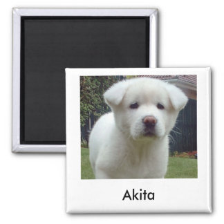Akita Puppy Magnet