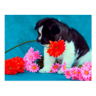 Akita puppy with flowers postcard