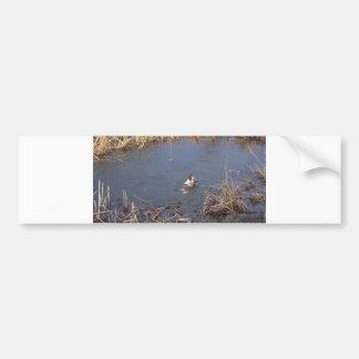 akita swimming bumper sticker