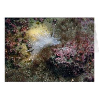 Alabaster Nudibranch Card
