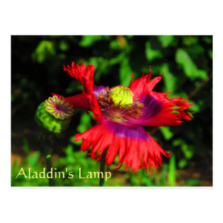 Aladdin's Lamp Postcard