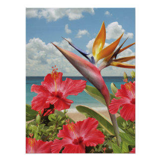 "Alan Giana ""Hibiscus in Paradise"" Poster"