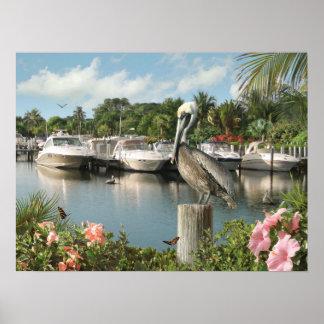 "Alan Giana ""Pelican Cove""  Poster"