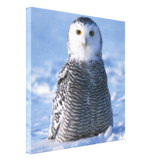 Alaska Arctic Snowy Owl Photo Designed Stretched Canvas Print