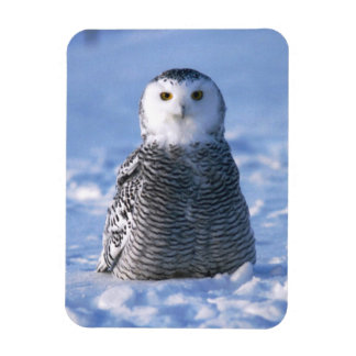 Alaska Arctic Winter Snowy Owl Designed Rectangular Photo Magnet