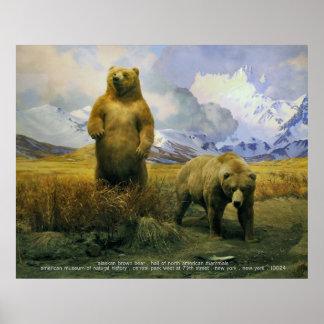 Alaska Brown Bear Poster