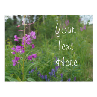 Alaska Fireweed wildflower Postcard