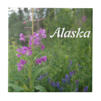 Alaska Fireweed wildflower Tile