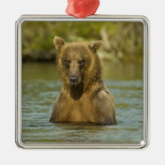 Alaska. Katmai NP. Coastal Brown Bear fishing Metal Ornament