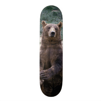 Alaska, southeast region Brown bear Ursus Custom Skate Board