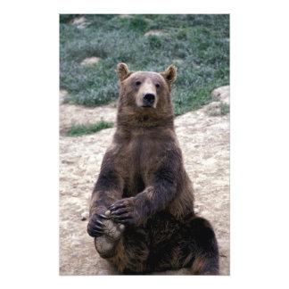 Alaska, southeast region Brown bear Ursus Photo Print