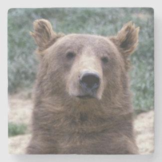 Alaska, southeast region Brown bear Ursus Stone Beverage Coaster