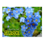 Alaska State Flower: Forget-me-not Postcard