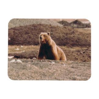 Alaska Tundra Grizzly Sow Arctic Refrigerator Magnet