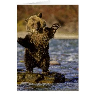 Alaska, USA, Grizzly Bear, Ursus arctos, cub Greeting Card