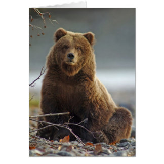 Alaskan Brown Bear at Kenai NWR, Alaska Card