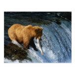 Alaskan Brown Bear Catching Salmon at Brooks Post Card