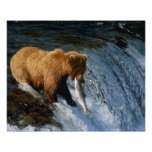 Alaskan Brown Bear Catching Salmon at Brooks Poster