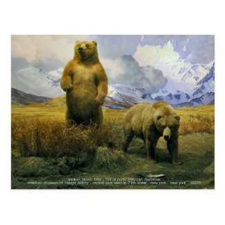 alaskan brown bear postcard