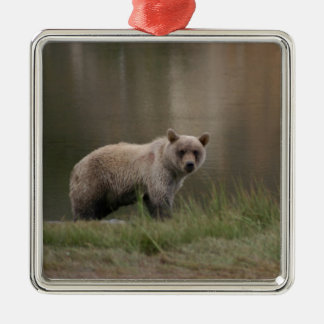 Alaskan Brown Bear Silver-Colored Square Ornament