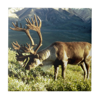 Alaskan Caribou Tile