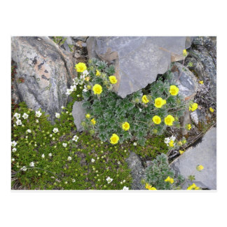 Alaskan Flowers in Denali National Park Postcard