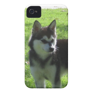Alaskan Klee Kai Dog iPhone 4 Cases