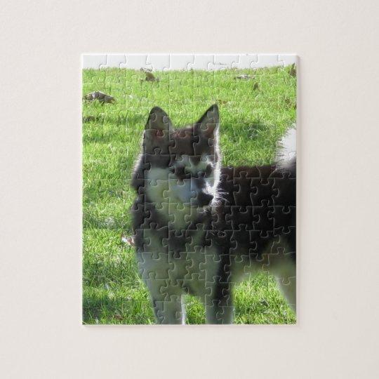 Alaskan Klee Kai Dog Jigsaw Puzzle